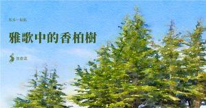 雅歌中的香柏樹
