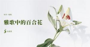 雅歌中的百合花
